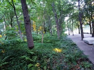 プライム・ストラテジーオフィス近くの森